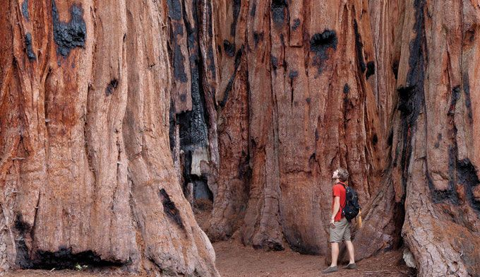 This one-week, 1,029-mile California road trip explores Yosemite, Sequoia, Kings Canyon, and Death Valley. On the way, you'll see big trees, desert, mtns.