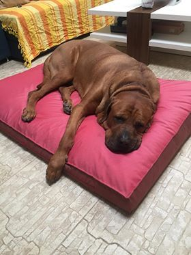 Handmade mattress, for large size dogs, manually sewn and finished, made from resistant materials, size 131/91cm, thickness 11 cm,a 5 cm thick sponge base and a siliconized puff layer,being comfortable for any furry pets.Unique design!The cover is washable at 30 ° C.