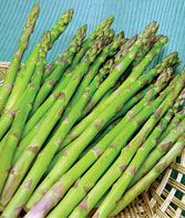 Jersey Knight PP 6624 Asparagus Seeds and Plants, Vegetable Seeds at Burpee.com