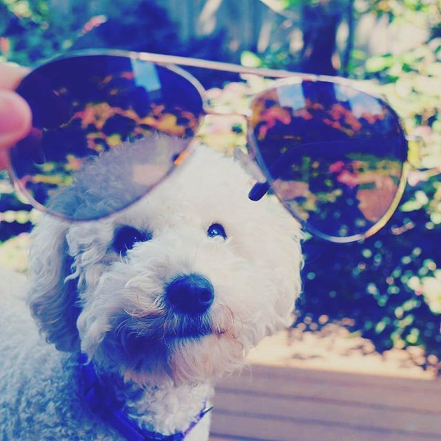 Even the dogs obsessed with the Aaina frames :P  #aaina #frames #love #hisnhersco #sunnies #cuteness #adorable #dogsofinstagram #dogs #cutest #cute