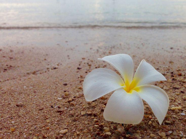 Sairee Beach Koh Tao Flower Choose Dive School
