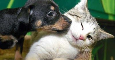 Cute Puppies and Kittens Together Pictures and Desktop Wallpaper       Very Cute Puppy and Kitten Pictures       Puppy and Kitten Loving ...