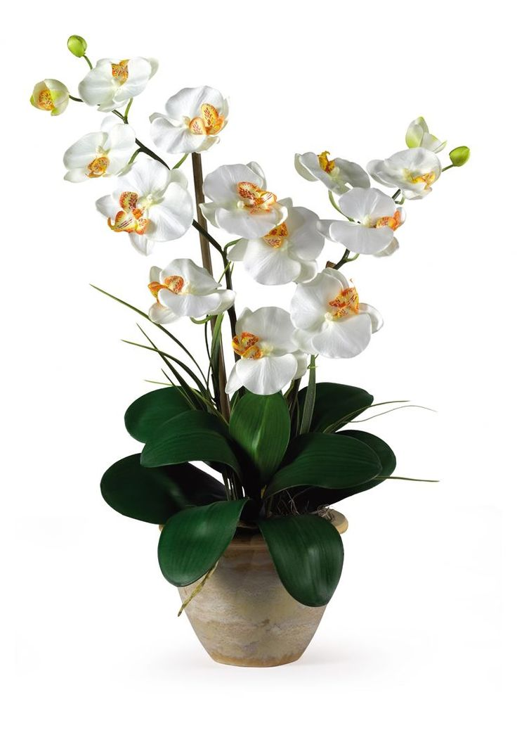 Double Phalaenopsis Silk Orchid Arrangement in Cream