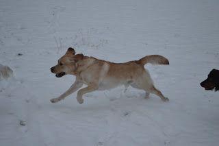 Gårdstunet Hundepensjonat: Rolig dag på tunet, og snøen laver ned :-)