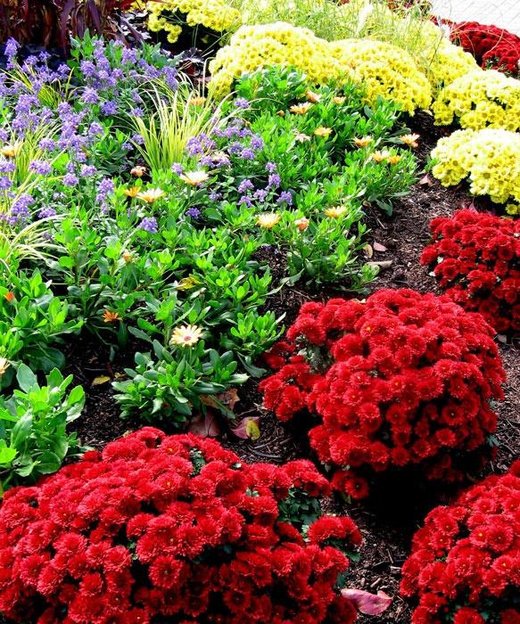 Fall Flower Mums: 64 Best Fall Garden Images On Pinterest