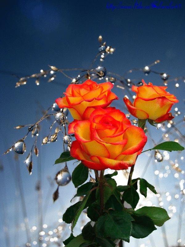 Las tormentas de la vida son para limpiar el corazón...   de vez en cuando es bueno dejar que los vendavales   se lleven lo que nos ha...