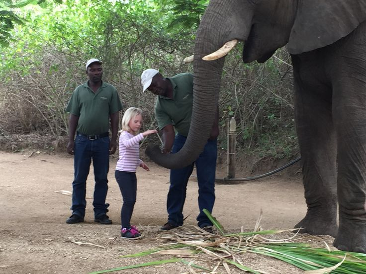 A very special moment with the most intelligent animal, the Elephant.