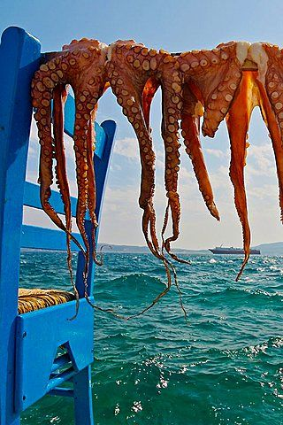 Drying octopuses, Adamas village, Milos, Cyclades Islands Greece