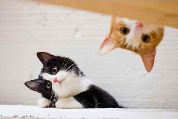 Bukan 1, Tapi Adopsilah 2 Kucing - http://kucingraas.co.id/bukan-1-tapi-adopsilah-2-kucing/