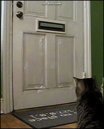 "Untitled, cat-gif-blog: Cat gets mail! ""Everyday around..."