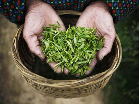 A woman holds tea leaves at a tea plantation in Moganshan, Zhejiang province.