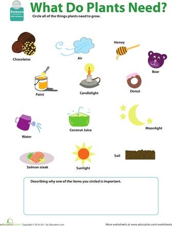 Worksheets For Grade 1 In Science : 90 best sci grade 3 images on pinterest