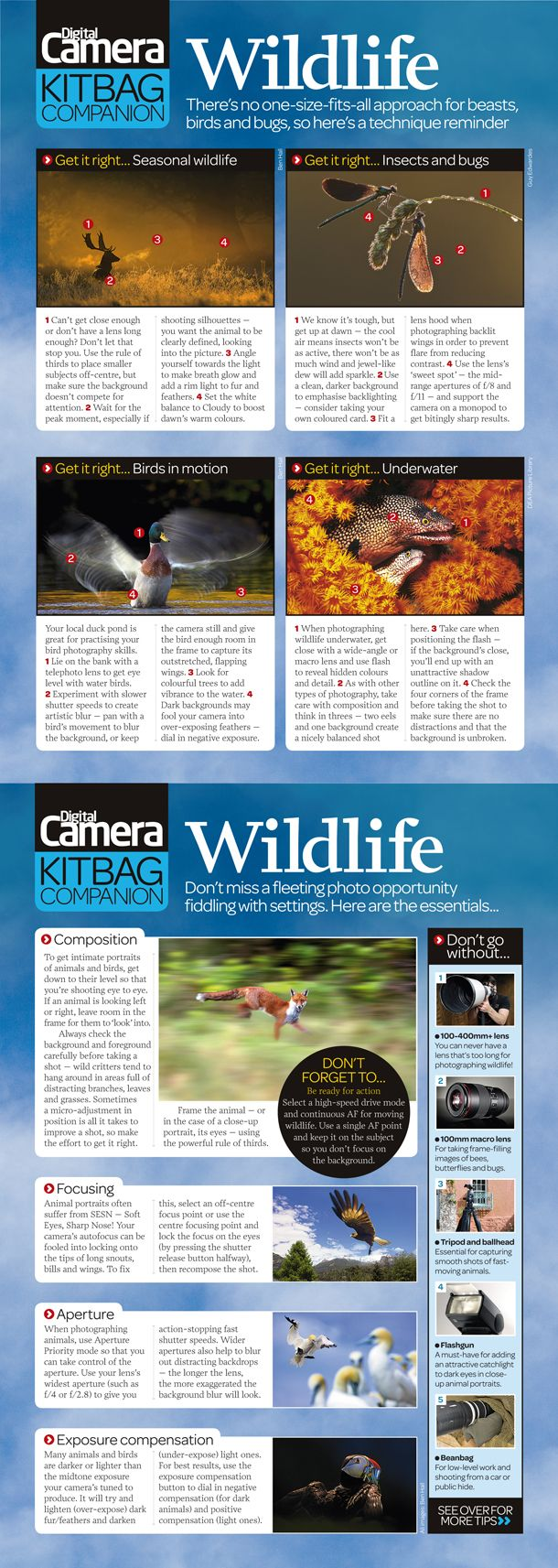 wildlife photography cheat sheet:   tips on composing, exposing and how to shoot some of the more popular subjects