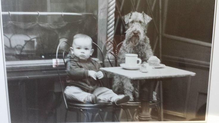 photo from shop withf baby and Airedale