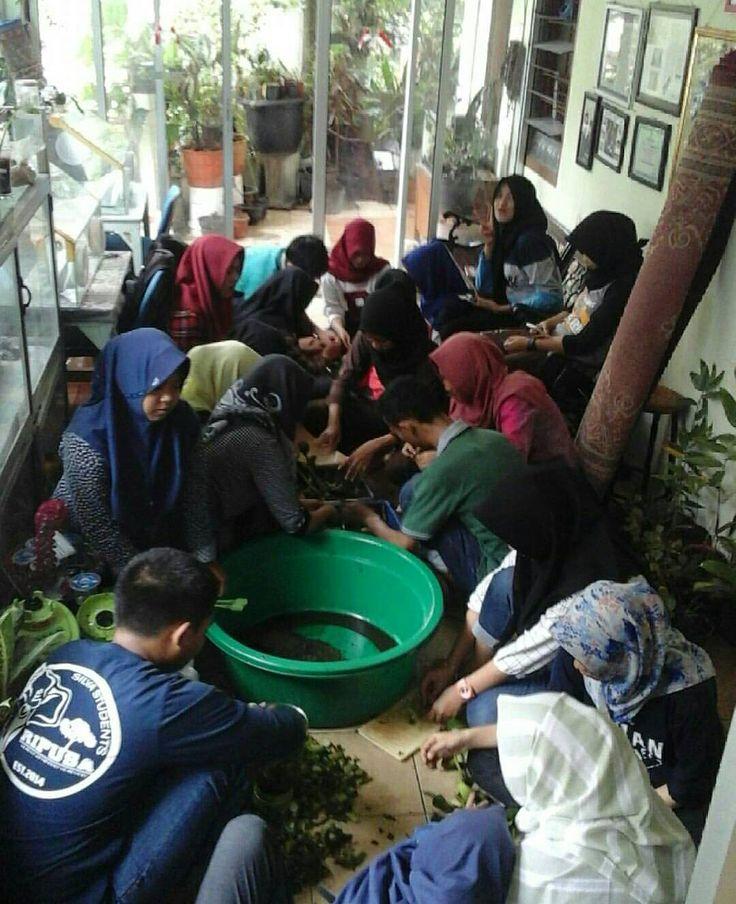 Tadi siang keseruan membuat pupuk organik cair dilakukan oleh siswa siswi SMK 1 Sojoul Sulawesi dan SMK Kehutanan Bhakti Rimbawan Bogor  #tissueculture #kulturjaringan #kuljar #skalarumahtangga #visitbogor #pelatihan #bogorpisan #kunjungan #eshaflora #wilayahbogor  #infobogor #pelatihan #penelitian #magang #pklp #smkn1 #smkn1sojoul #sulawesi #smkkehutanan #bhaktirimbawan #pembuatanpupuk #pupukorganikcair #poc