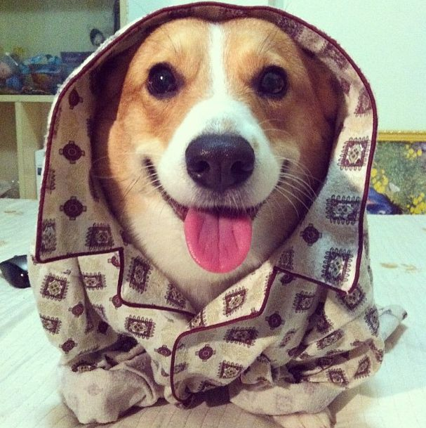 81 Best Pets In Pajamas Images On Pinterest For Dogs