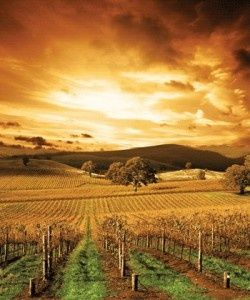 The Barossa Valley is one of Australia's oldest wine regions. Located in South Australia, the Barossa Valley is about 56 km (35 miles) northeast of the city of Adelaide. (scheduled via http://www.tailwindapp.com?utm_source=pinterest&utm_medium=twpin&utm_content=post3918107&utm_campaign=scheduler_attribution)