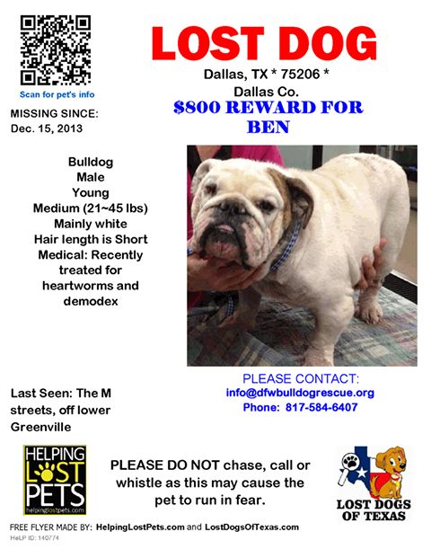 55 best Stop Animal Cruelty images on Pinterest Doggies, Bullies - lost dog flyer examples