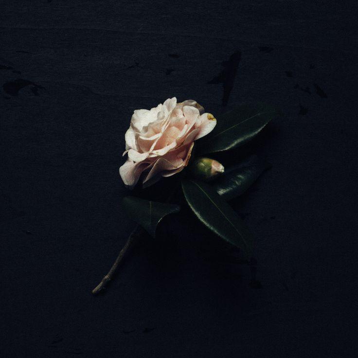 flora  photography by Rakai Karaitiana @ aroha and friends