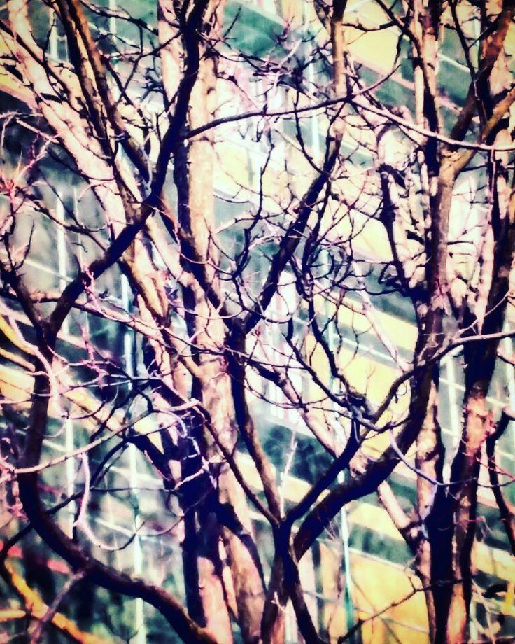Contemporaryart#photo#digitalart#digitalartists#art#world#tree#live#photographer#