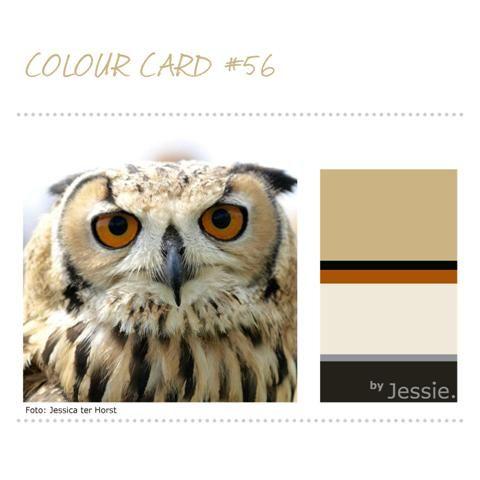 Ook deze 'mooie-vogel-foto' is prachtig! En, het levert een erg mooie #ColourCard met stoere kleuren op. Het okergeel maakt het pittig.  Dit kleurenschema kun je natuurlijk in de woonkamer toepassen, maar is ook bijzonder mooi voor een badkamer of keuken.