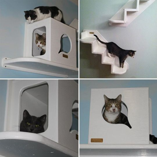 28 best images about catification on pinterest for Cool cat perches