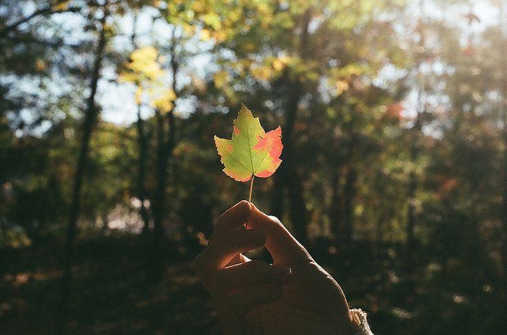 L'automne s'en vient, c'est à suivre !