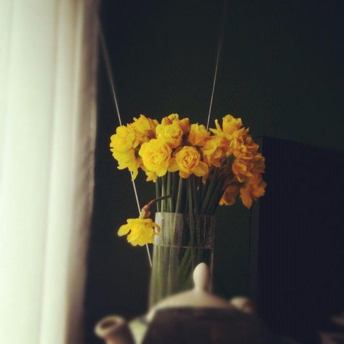 daffodilsMarching Flower, Happy, Flower Power, Daffodils Flowershop