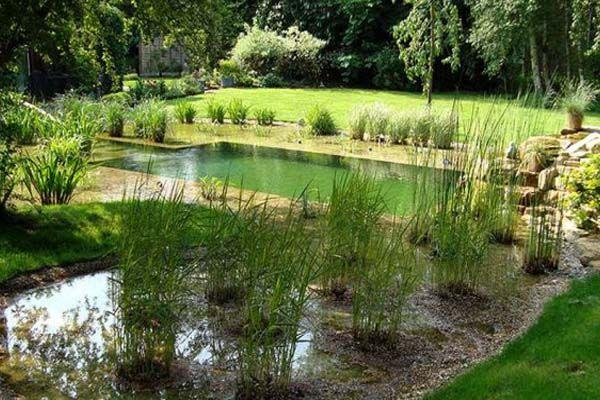 Egyre több természetes uszoda nyílik Európában – növények tisztítják a vizet klór helyett