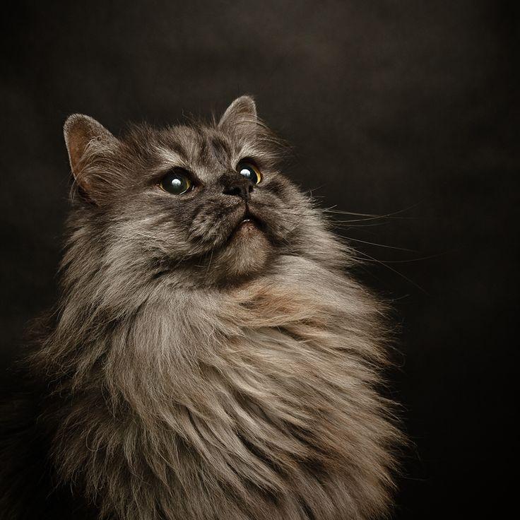 cat photo shop