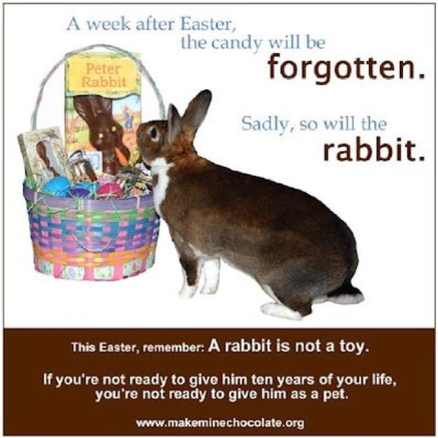 148 best not easterxmas gifts images on pinterest bunnies easter of rabbits bought at easter are dumped at a shelter within a year please dont buy a rabbit at easter they are not toys make mine chocolate negle Choice Image