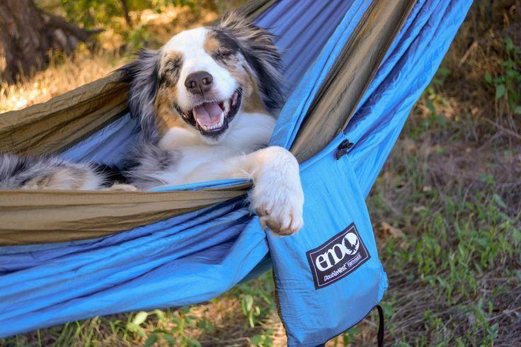 Aussie in a hammock