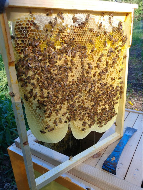 Layens Horizontal Honey Bee Frames Wax Comb GuideAssembled