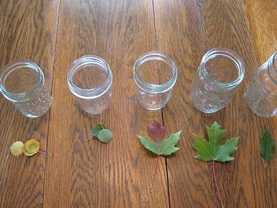 Almost Unschoolers: Fall Science Part 2 - Leaf Chromatography - Predicting the Changing Fall Colors - Or Why Leaves Change Color In The Fall.