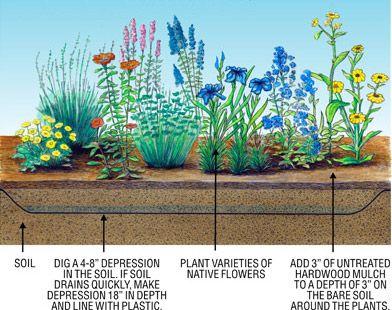 The 25 best Rain Garden ideas on Pinterest Rock garden borders