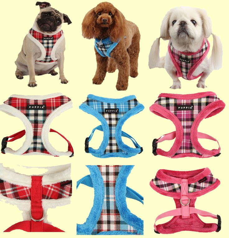 Uptown 2 (Winter) harness from Puppia!  Warm and very fashionable. Retails for $24.00 but is on sale now for only $20.00 at www.puppiaharness.ca