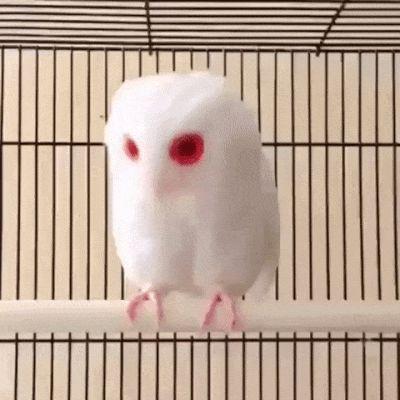 23 Albino-Tiere, die aussehen, als wären sie von einem anderen Planeten | CutesyPooh   – Animals, pets and all other creatures