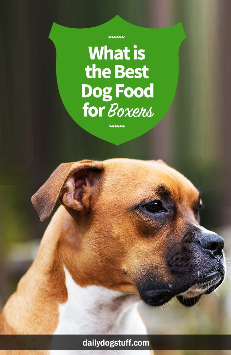 What Is The Best Dog Food For Boxers Best Dog Food Dog Food Recipes Healthy Dog Food Recipes