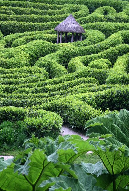 The maze at Glendurgan Garden in Falmouth, Cornwall