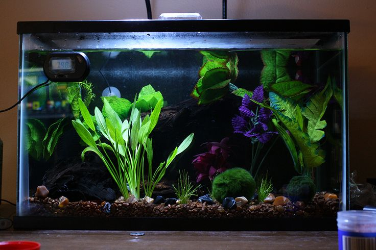 17 best images about betta fish guide crafts tanks on for Live plants for betta fish