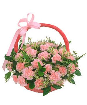 Mother's Kiss, 36 pink carnations in flowers basket - flowers to Chinese mothers, flowers delivery