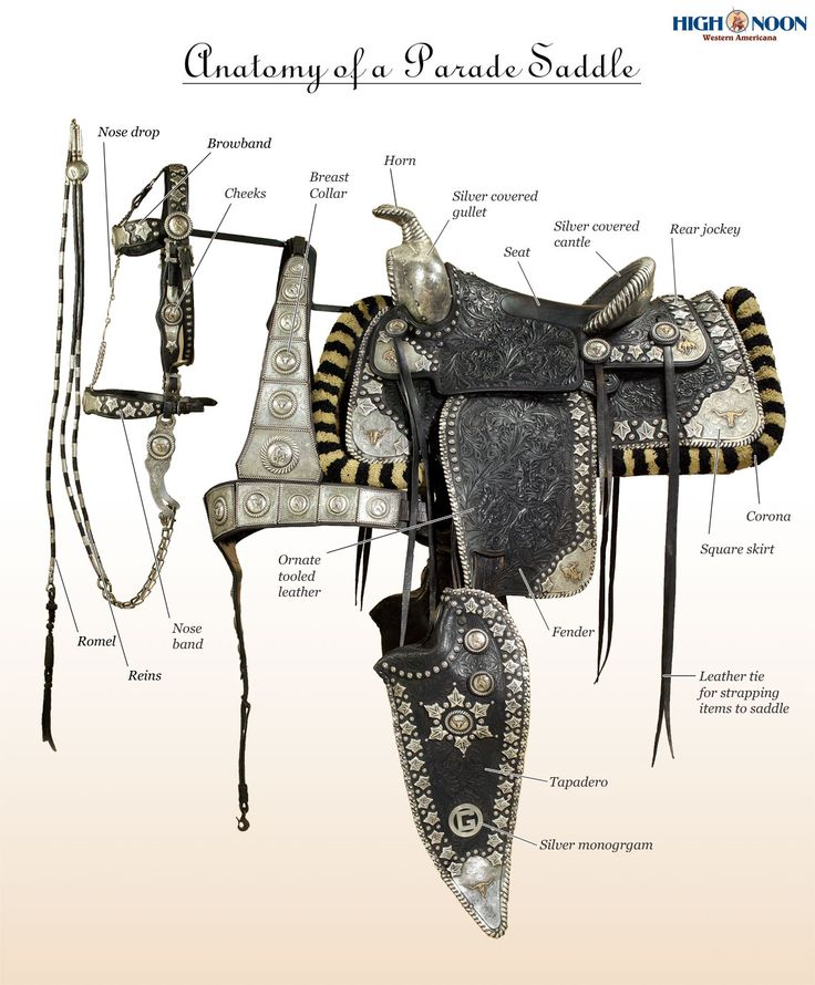 Anatomy of a Parade Saddle Infographic | High Noon Western Auction/ Bohlin Machris model that sold for $106,000
