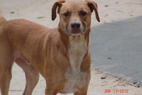 Adopt Dogs Panama City Fl