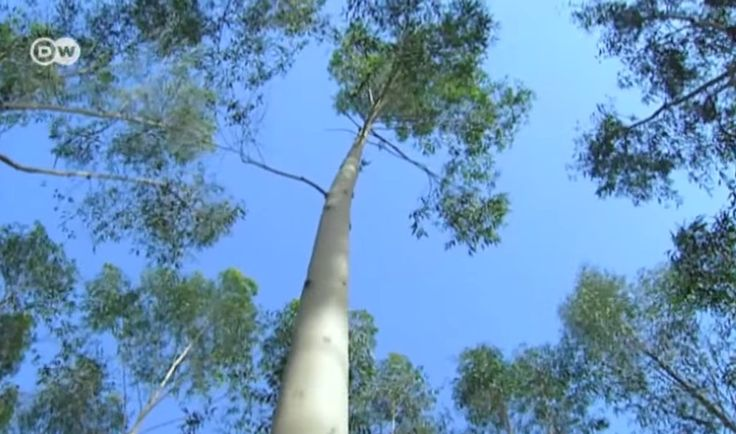 Egipto: plantan un bosque en el desierto - Ecocosas