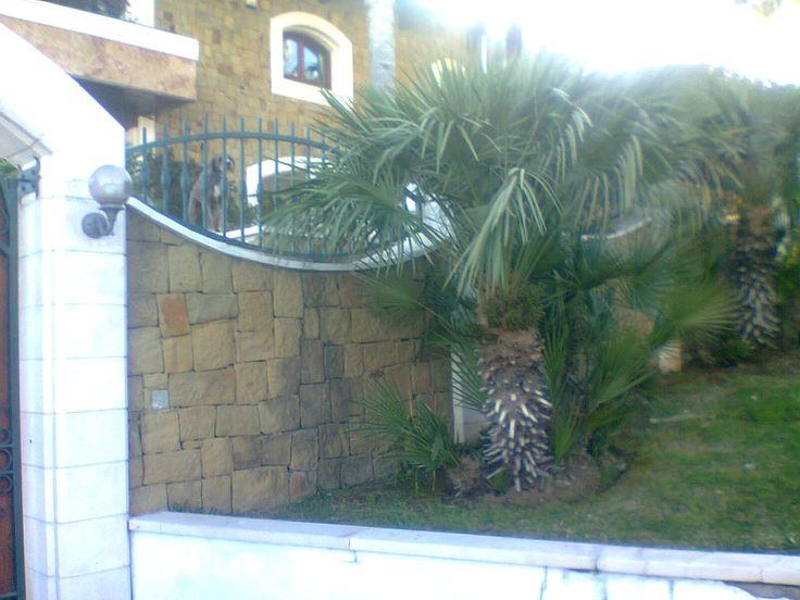 Nice dog on verandah with pretty garden below