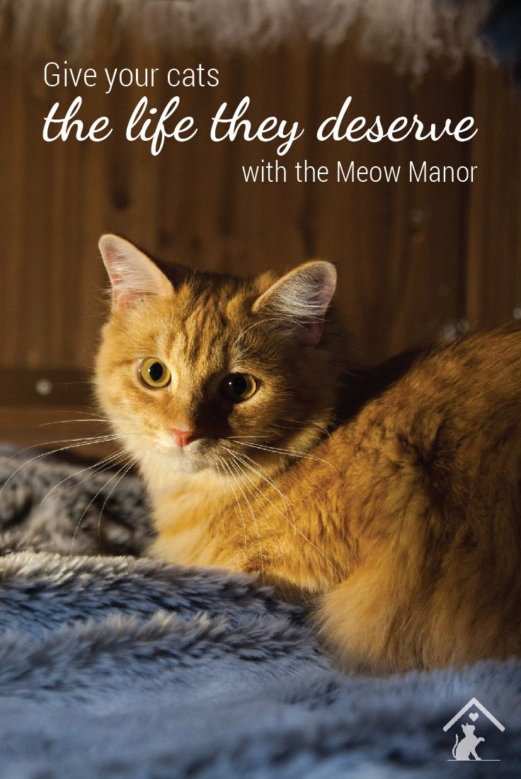 The Meow Manor outdoor cat enclosure gives your cat the freedom to enjoy thr outdoors safely! Click the image to find out more. #meowmanor #outdoorcatenclosures #backyardcatenclosures