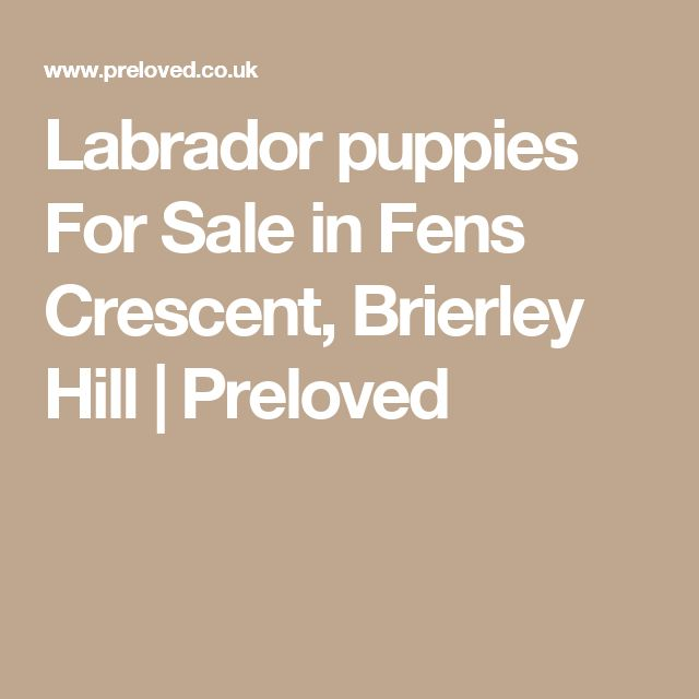 Labrador puppies For Sale in Fens Crescent, Brierley Hill | Preloved
