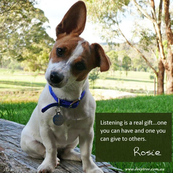 Rosie is a great listener! It's a gift she has. Listening without needing to speak allows you to connect at a really deep level with others. www.deeptree.com.au  #Rosiesays #wisdom #inspiration #deeptreelifecoaching