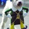 cute dog costume--dog as buddy the elf
