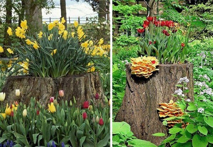 Uma árvore de grandes proporções cultivada em seu jardim pode trazer muitos empecilhos, um deles é com relação a raízes, que fatalmente...